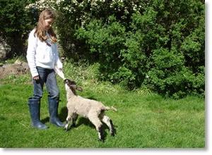 Kate feeding the orphan lambs