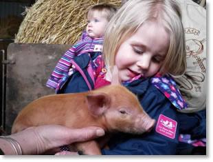 piglet petting