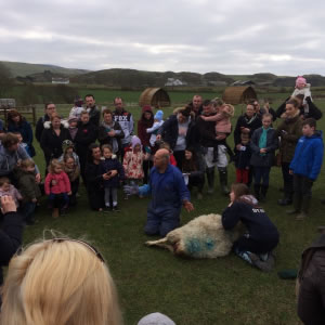 Lambing live at Knockaloe Beg Farm - demonstration by John Anderson